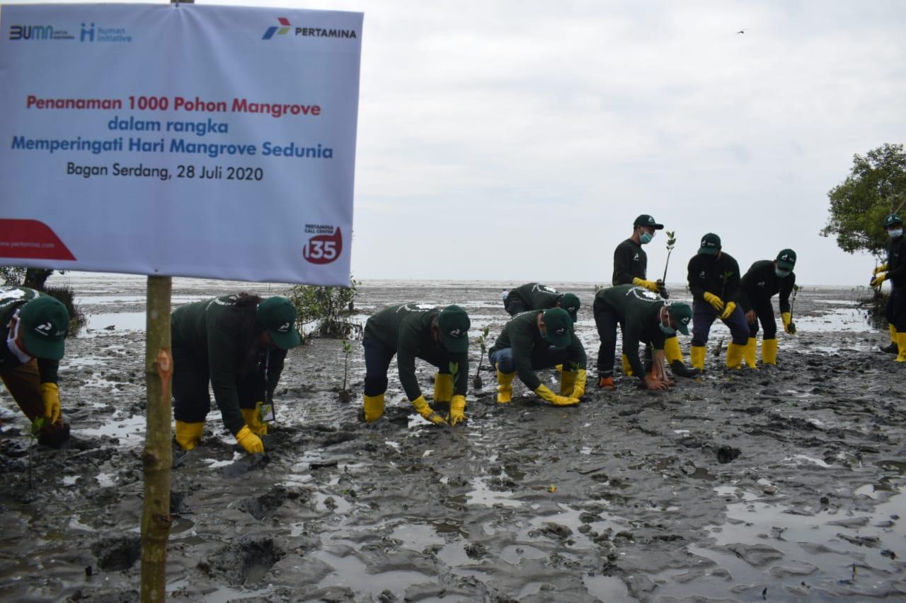 Commemorating World Mangrove Day, North Sumatra Human Initiative and Pertamina Planted 1000 Trees in Bagan Serdang