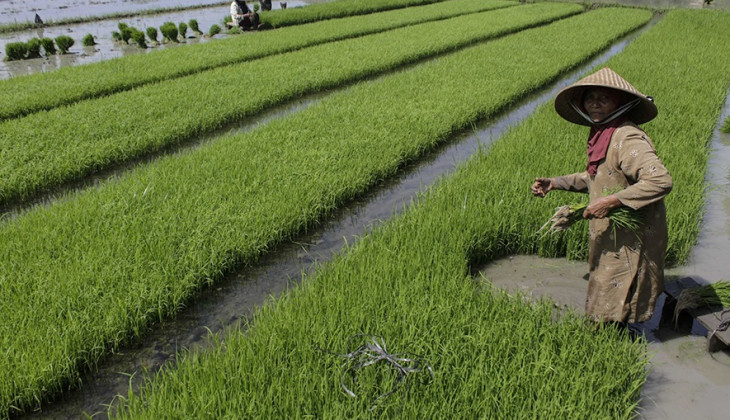Strengthening Food Security during the PPKM Period